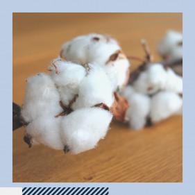 Why Choose Organic Cotton?