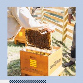 Omniteksas New Initiative: Taking Care of Bees